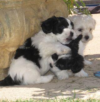 Pups2010